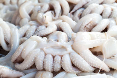overfishing: Fresh tentacles squid sold in the seafood market