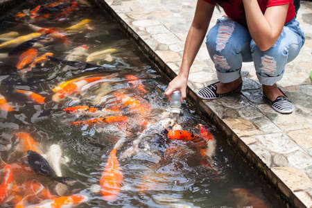 fancy: Feeding koi or fancy carp by hand Stock Photo