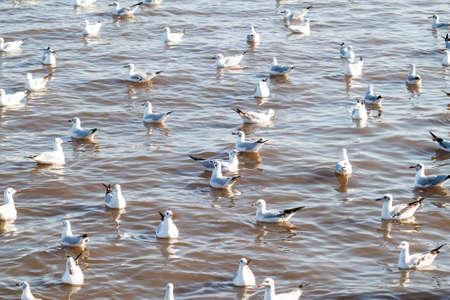 bang: Seagulls in the sea at Bang Poo, Samut Prakan