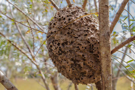 hormiga: ants nest made up of clay on the tree Foto de archivo