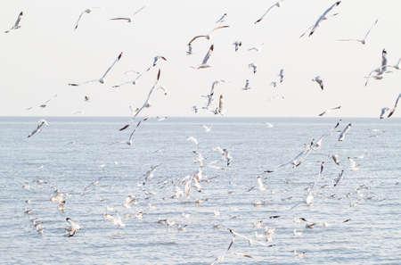 samut prakan: Seagulls in the sea at Bang Poo, Samut Prakan