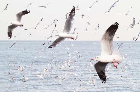 poo: Seagulls in the sea at Bang Poo, Samut Prakan