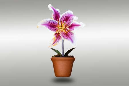 ollas de barro: llily flor en macetas de arcilla con trazado de recorte Foto de archivo