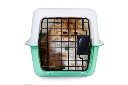 cat carrier: Persian cat in pet carrier on white background Stock Photo