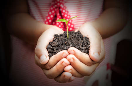 to thrive: child hands holding soil with sprout Stock Photo