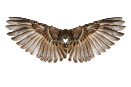 skrzydła ptaka na białym tle