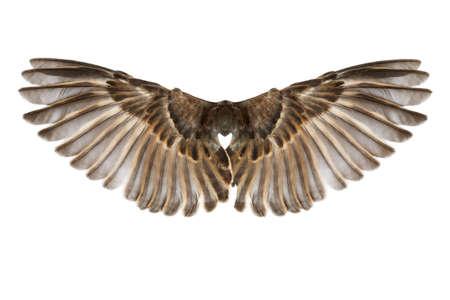 Vogelflügel auf einem weißen Hintergrund
