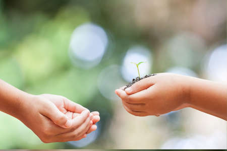 protected plant: child hands holding soil with sprout on green background Stock Photo