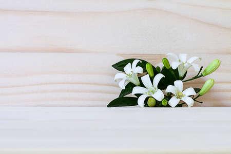 jessamine: Fiore bianco, arancio Jessamine (Murraya paniculata) sullo sfondo di legno Archivio Fotografico