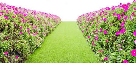 green grass way with flower on the side Stock Photo