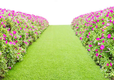 green grass way with flower on the side
