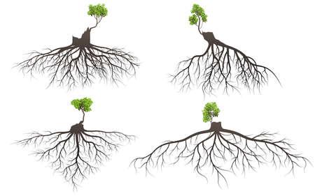 Ensemble de racines d'arbres avec des racines de membre germer silhouette vecteur Illustration. Vecteurs