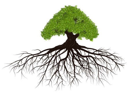 Big tree with root isolated on white background, vector illustration Ilustração