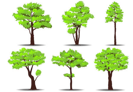 Ensemble d'arbres sur fond blanc. Illustration vectorielle de nature Banque d'images - 82179594