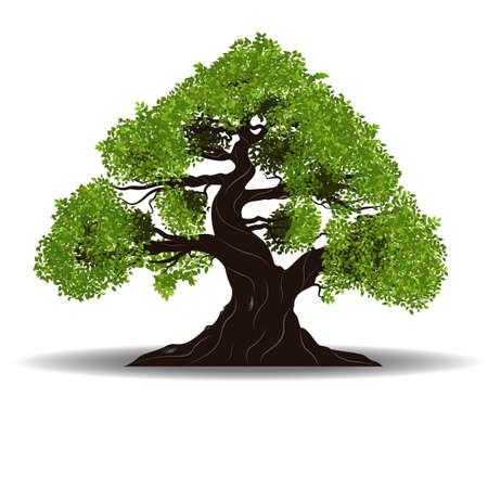 白い背景のベクトル図に分離された大きな木ベクトル  イラスト・ベクター素材
