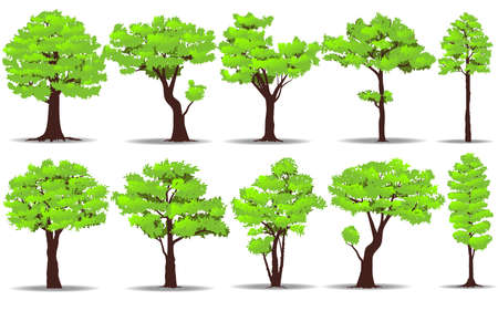 Ensemble d'arbres sur fond blanc. Illustration vectorielle de nature Banque d'images - 82179636