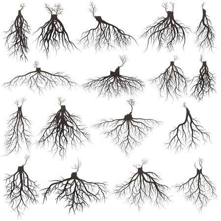 Set of tree roots with germinate limb roots silhouette vector Illustration.