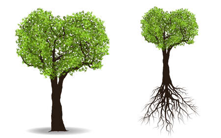 huge tree: Big tree with root isolated on white background vector illustration Illustration