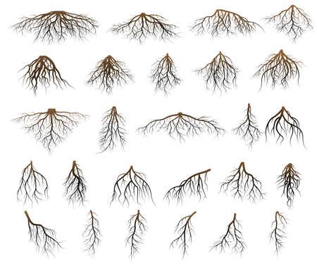 Ensemble de racines d'arbres. racines silhouette vecteur Illustration. Banque d'images - 82261313