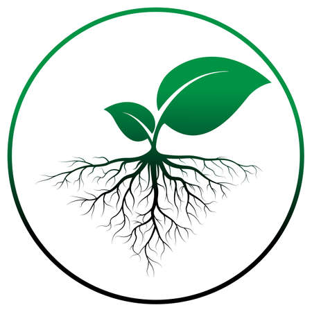 sprout tree with root vector on white background, vector illustration Vettoriali