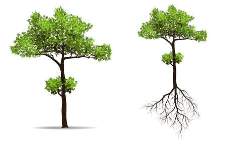 big tree with root isolated on white background, vector illustration Illustration