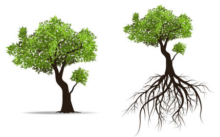 huge tree: big tree with root isolated on white background, vector illustration Illustration