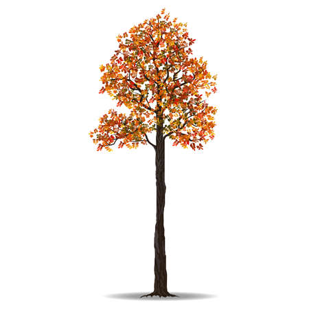 japanese garden: Red autumn tree isolated on white background, vector illustration