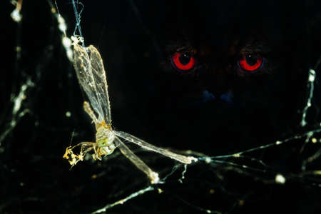 dragonfly caught in spider web with red eye staring, end of the freedom