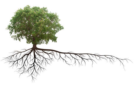 árbol de Banyan con raíz aislado en un fondo blanco