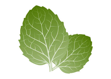 Fresh herb leaf. Mint leaves isolated on white background. foliage vector Иллюстрация