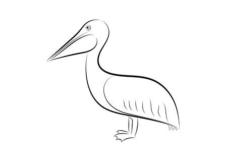 pelican line drawing on white background, design for deccorative icon,  Vector illustration Illustration
