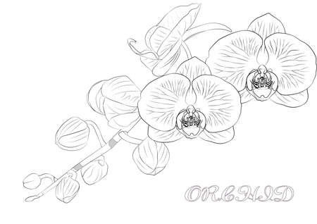 Vektorskizze der Orchideenblüte mit Blatt. Tropische Blumen isoliert auf weißem Hintergrund