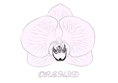 Vector sketch of orchid flower. Floral tropical isolated on white background