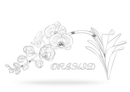 Vector sketch of orchid flower with leaf. Floral tropical isolated on white background