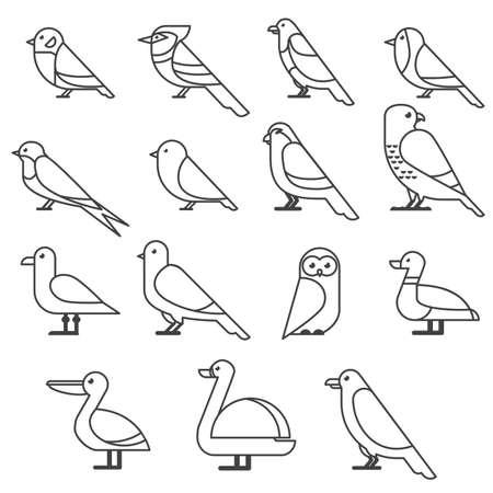 bird icon collection. Different birds species thin line style, flat design