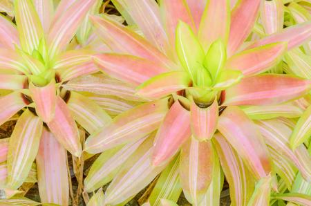 botanika: druh botaniky v zahradě