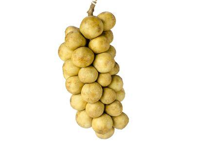lanzones: langsat or Lansium parasiticum , The plant which originates from Southeast Asia