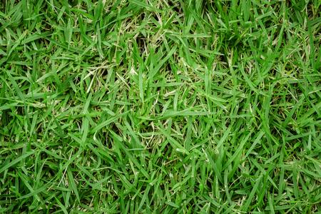 square of green grass ,onbody on grassland, grass texture