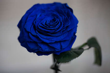 Great gift for the woman on Valentines day. The eternal rose.