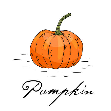 Poster with hand drawn pumpkin isolate on a white background.