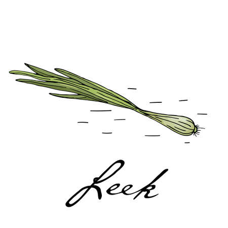 Poster with hand drawn leek isolate on a white background.