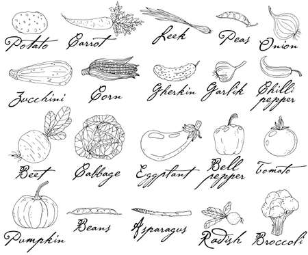 Set of elements with hand drawn vegetables on a white background.