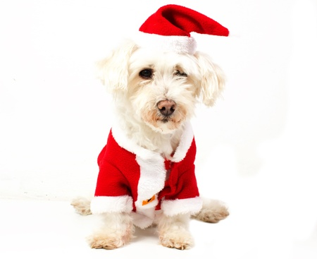 dog dressed as Santa Claus Stock Photo