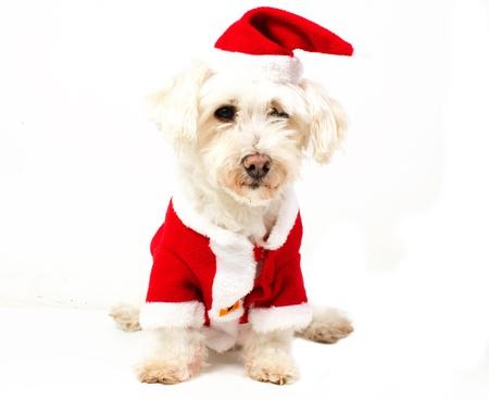 dog dressed as Santa Claus Stock Photo
