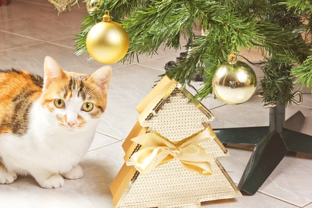 cat with balls on a christmas tree