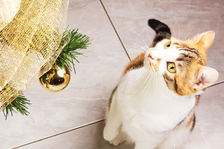 cat play with balls on a christmas tree photo