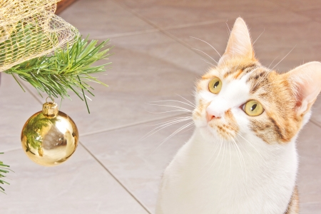 cat play with balls on a christmas tree Stock Photo - 16794107