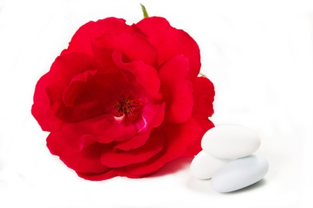 sugared almonds on white background with rose photo