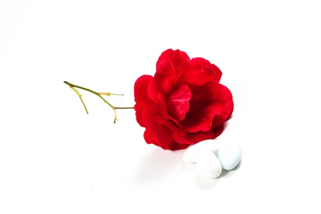 favours: Sugared Almonds on white background with rose Stock Photo
