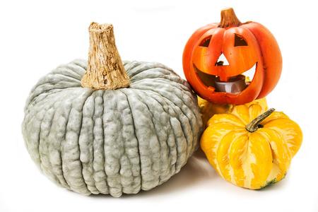 Colorful pumpkins. Halloween pumpkins. thanksgiving day. Pumpkin varieties. Stock Photo